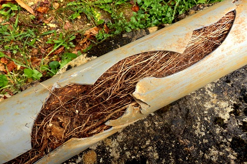 blocked drains by tree root